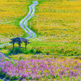 lining up by Martin Marthadinata - Landscapes Prairies, Meadows & Fields ( nature, landscape, flower )