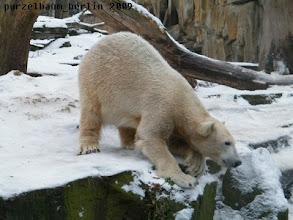 Photo: Hm, was ist dort unten los ?