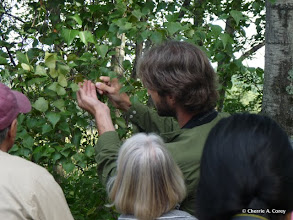 Photo: Sam Jaffe finds a yellow-shouldered slug caterpillar, 8.21.10