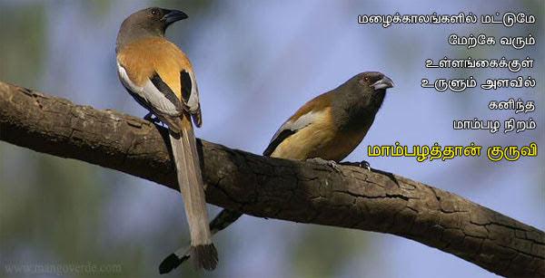 மாம்பழத்தான் குருவி