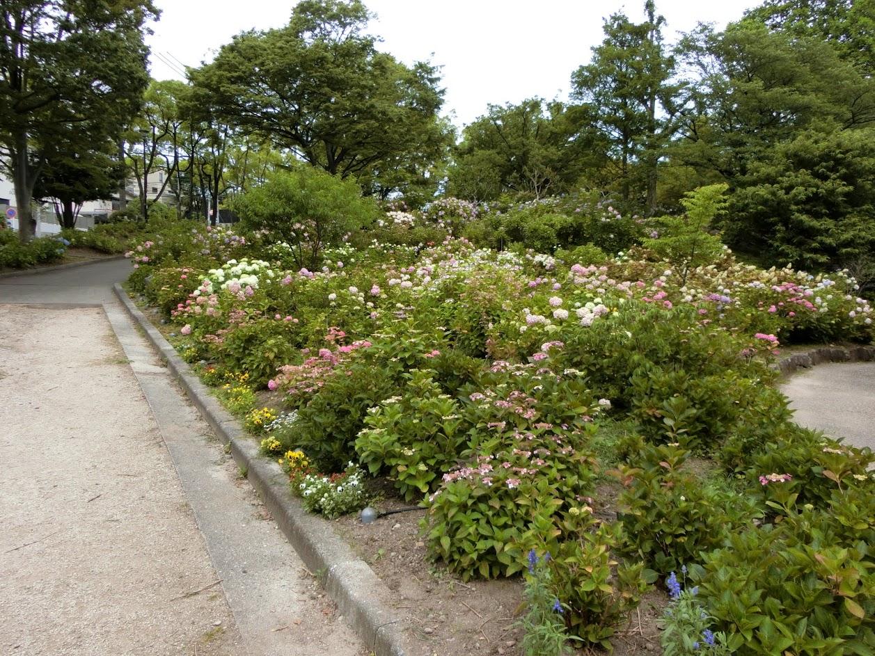 あじさいが咲く茶屋ヶ坂公園