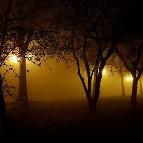 Night foggy lights by Marin Mavra - Landscapes Weather ( #mystic, #trees, #night, #fog, #lights )