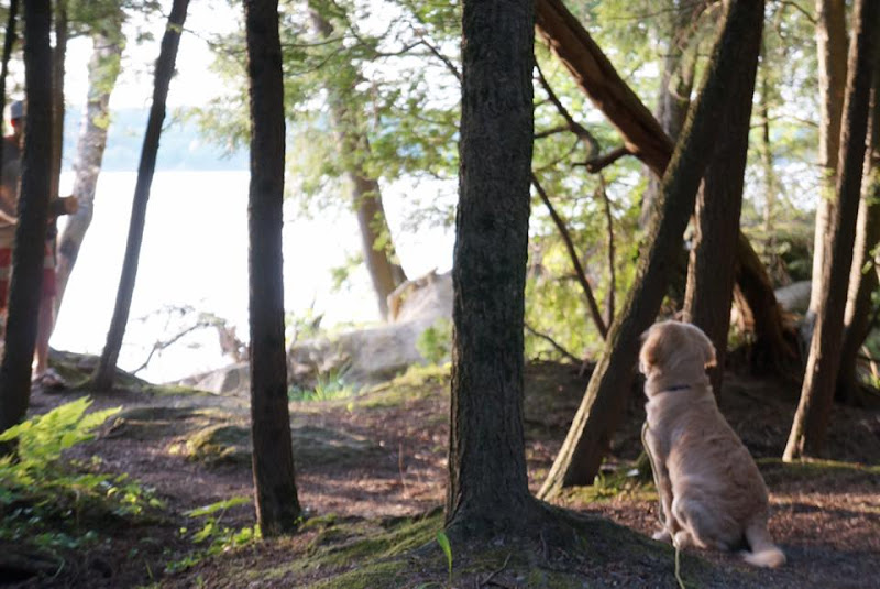 Photo: A puppy reflecting on his first camping trip at Lake Carmi State Park by Adrienne Bonvini.
