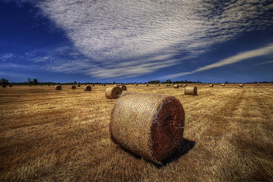 Rolling bales by Manny Zervos - Landscapes Prairies, Meadows & Fields