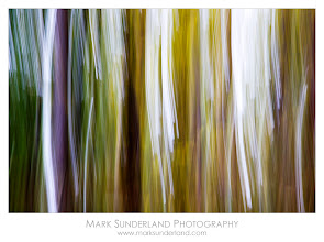 Photo: #TreeTuesday  Pine Trunks and Autumn Colours  Here's something a bit different for Tree Tuesday - taken as an example of vertical using camera movement to create abstract images of vertical tree trunks in a pine plantation on a workshop in Strid Wood last week.  I wasn't sure if this would work as there was a branch cutting across the vertical trunks covered in yellow leaves, but with a swift movement of the camera the horizontal element is lost and the yellow colour in the result is quite pleasing.  Canon EOS 5D, 24-105mm at 105mm, 1/6s at f9