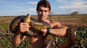 Giant Anacondas thumbnail