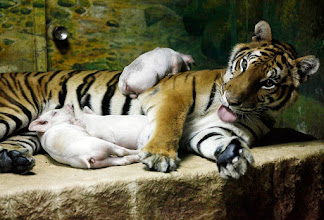 "Photo: This tiger lives in a zoo in Thailand with her adopted baby piglets. The zoo features an exhibit called ""happy families"" made of families of animals of mixed species. Hunting stimuli needs to be activated before they hunt the prey. If the prey does not run the predators might not be activated to run after the prey.  People: a pig embryo and a human embryo resemble each other so much that it's hard to see the difference between them. And they should be similar as we share 80%-90% of our DNA with pigs and 50% of our DNA with bananas.  What will happen if you notice some people run past you? Will your reflexes for running be activated to make you able to run better or will you go through a long thought process and then make your decision? Animals have flight or fight mechanisms and they will activate defense mechanisms by blood flow and brain activity."