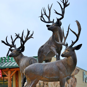Cabella's by Tammy Little Elam - Buildings & Architecture Statues & Monuments (  )