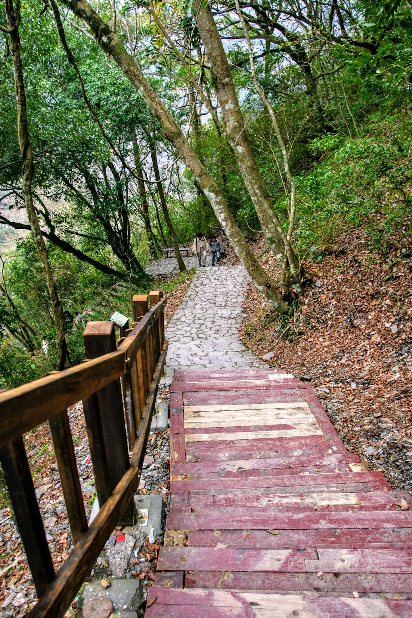 過了那一片櫻花林後,後方就是健行步道囉...