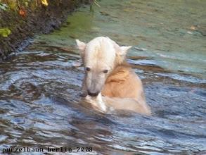 Photo: Knut beim Badespass :-)