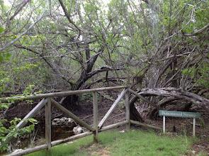 Photo: #6 Buttonwood Swamp Aug.18, 2013
