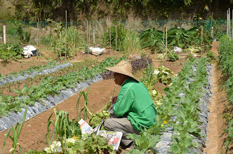 Photo: Vegetable farms