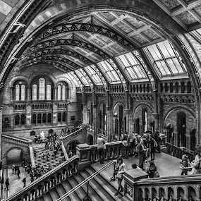A Day at the Museum by Jan Murphy - Black & White Buildings & Architecture ( railings, stairs, monochrome, hdr, windows, people, natural history museum,  )