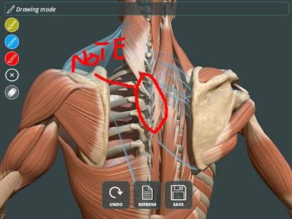 Visual Anatomy 3d Human Apps On Google Play