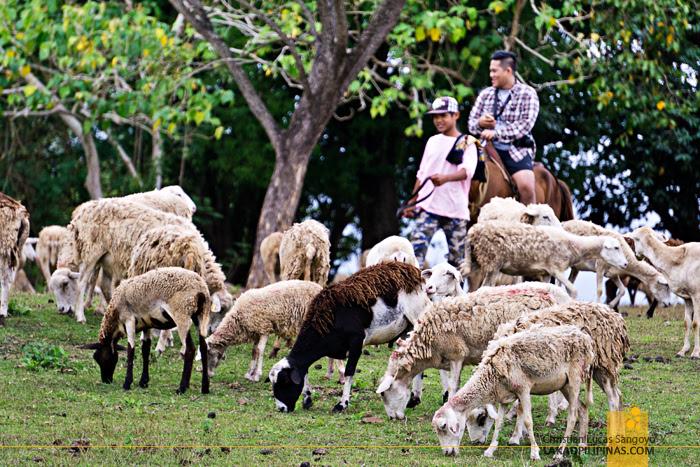 PMP Paradise Farm & Resort Nueva Ecija