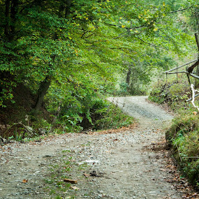 the road by Iulia Georgescu - Landscapes Mountains & Hills ( fence, wood, tree, village, autumn, grass, green, fall, traditional, road, house, rural )