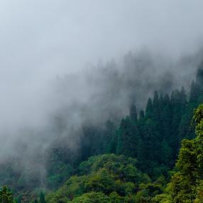 Engulfed by Prabir Adhikary - Landscapes Mountains & Hills ( dense fog, foggy, fog, shrouded in mist, mist,  )