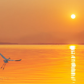 The Moment II by Stanley Loong - Landscapes Sunsets & Sunrises ( bird, reflection, waterscape, warmth, sunrise, landscape,  )