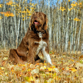 Autumn Dog by Twin Wranglers Baker - Animals - Dogs Portraits (  )