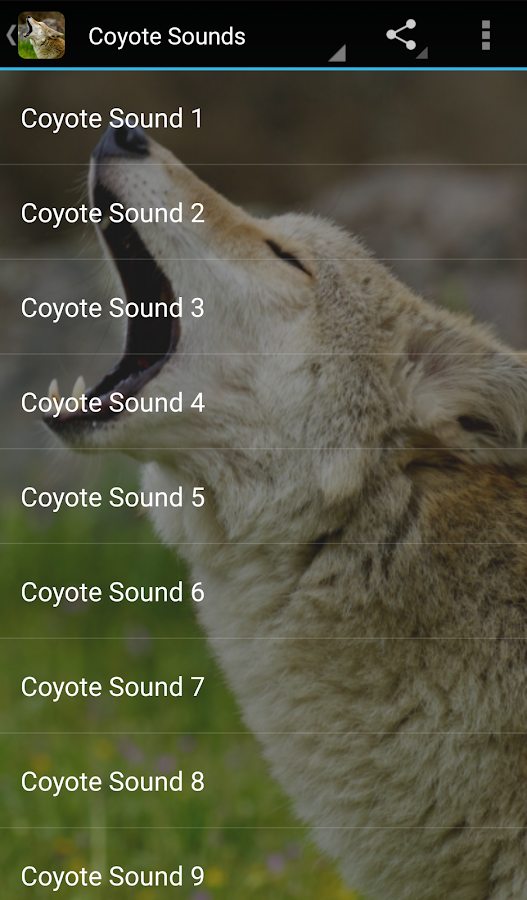 Coyote Sounds- screenshot