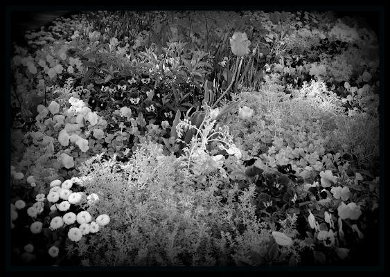flowers di robertodegni