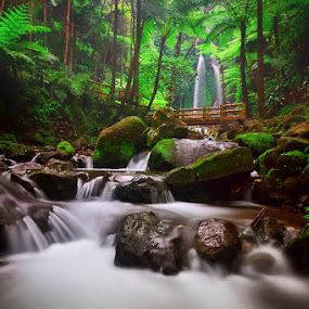 Nature Song by Hendri Suhandi - Landscapes Forests ( waterscape, waterfall, rock, forest, travel, morning, central java, nature, fog, jungle, trees, long exposure, java, karanganyar, garden )