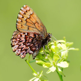 Butterfly by Sandy Lindley - Animals Insects & Spiders ( nature, butterfly, up close, colorful )