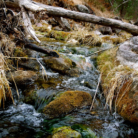 Cold Water by J.c. Phelps - Landscapes Waterscapes ( water, waterfall, creek, moss, rocks )