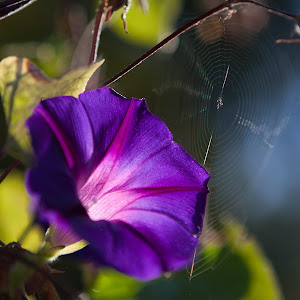flower and spider web.jpg