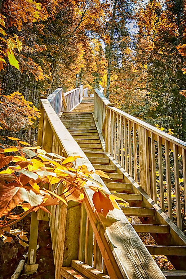 Devil's Kettle Stairway  by Linda Tiepelman - Landscapes Forests ( gunflint, waterfalls, lake superior, devil's kettle, hiking, mn., minnesota, stairway, grand marais, trail, cook country, north shore, judge magney state park )