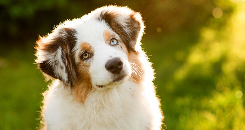 Dogs: The Good, The Great, And The Best
