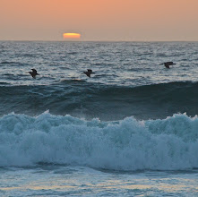 Photo: 84. More pelicans! Thank you so much for flying into my foreground - much obliged.