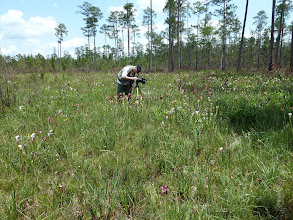 Photo: Siggi filming Sarracenia at Splinter Hill Bog Preserve in Alabama.