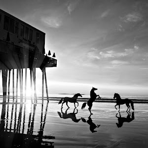 sun rise pier with horses black and white.jpg