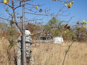 Photo: Day 5 - Richard getting the shot, Grevillea benthamiana, yellow flower is Kapok Bush, Cochlospermum fraseri, near Fergusson River