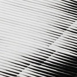Snow keyboard by Zenonas Meškauskas - Abstract Patterns ( roof, keyboard, snow )