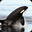 Orca Wallpaper icon