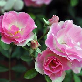 DEB#35 by Debanjan Goswami - Flowers Flower Buds