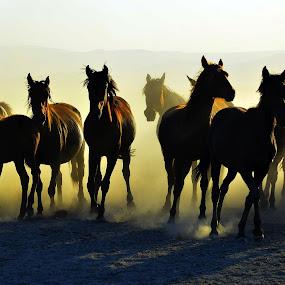 area of freedom by Mustafa Tor - Animals Horses ( horses, freedom )