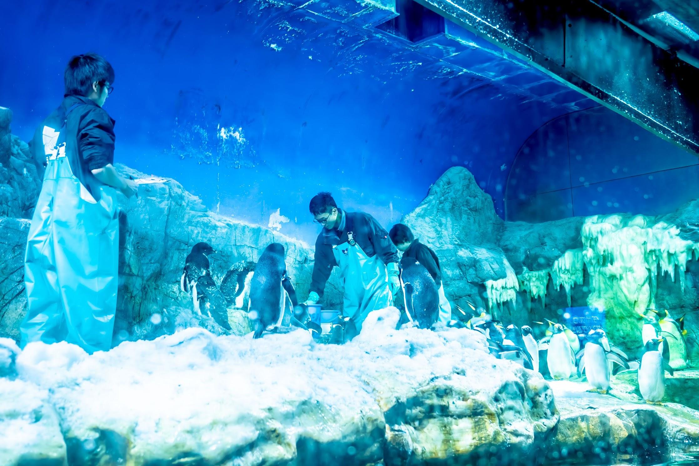 海遊館 ペンギン3