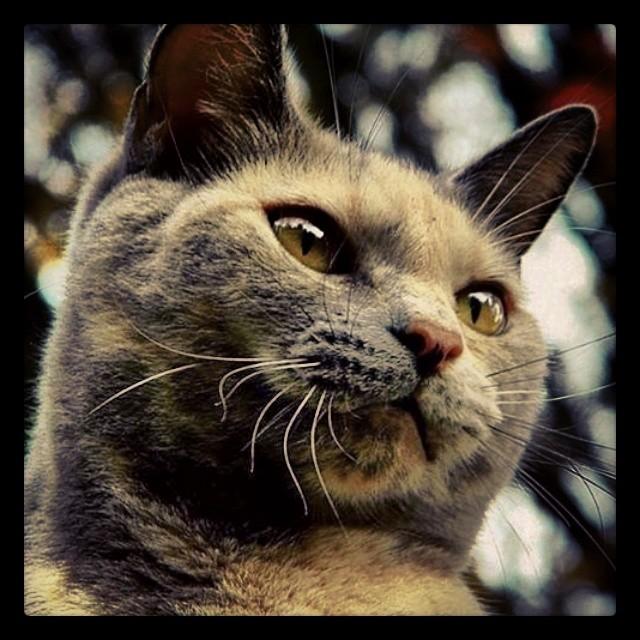 by James Cole - Animals - Cats Portraits ( cat, cats, pet, petstagram, nature, kitten, kittens, catstagram, cutie, pets, kitty, catlovers, catsofinstagram, animal, sweet, life, catlover, ilovemycat, ilovemypet, instapets, petsagram, meow, picpets, instacat )