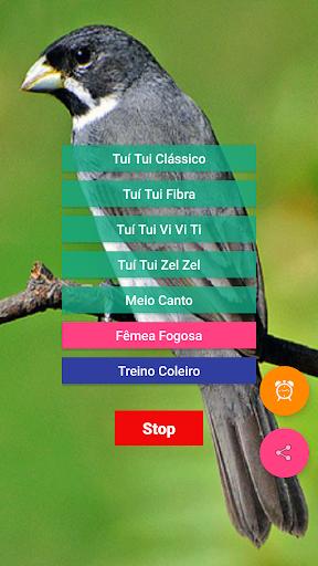 娛樂必備免費app推薦|Coleiro Fibra Campeão線上免付費app下載|3C達人阿輝的APP