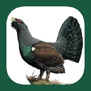 App Icon for Birds of Eastern Europe App in Czech Republic Google Play Store