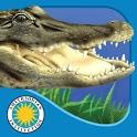 Alligator at Saw Grass Road icon