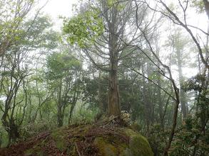 岩の上に一本木