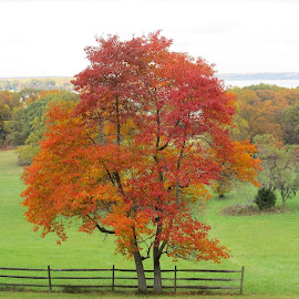 Fall is here by Maricor Bayotas-Brizzi - Nature Up Close Trees & Bushes