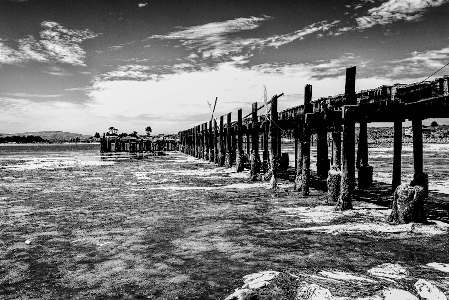 Piers and moss by Craig Turner - Black & White Buildings & Architecture ( moss, pier, b&w, north coast, high contrast, norcal, bodega )