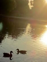 Photo: Two ducks in a romantic sunset on a lake at Eastwood Park in Dayton, Ohio.