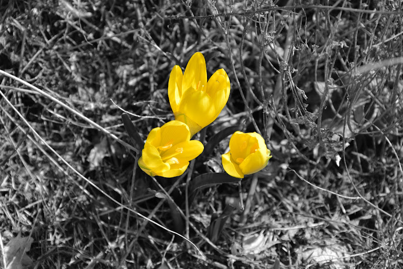 giallo e ......... di gianluca_simotti