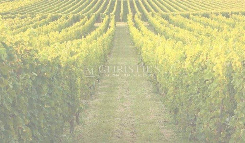 Vignoble Bordeaux